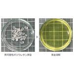 硬化したエポキシ系樹脂の強力な剥離剤  「eソルブ21AM-1」